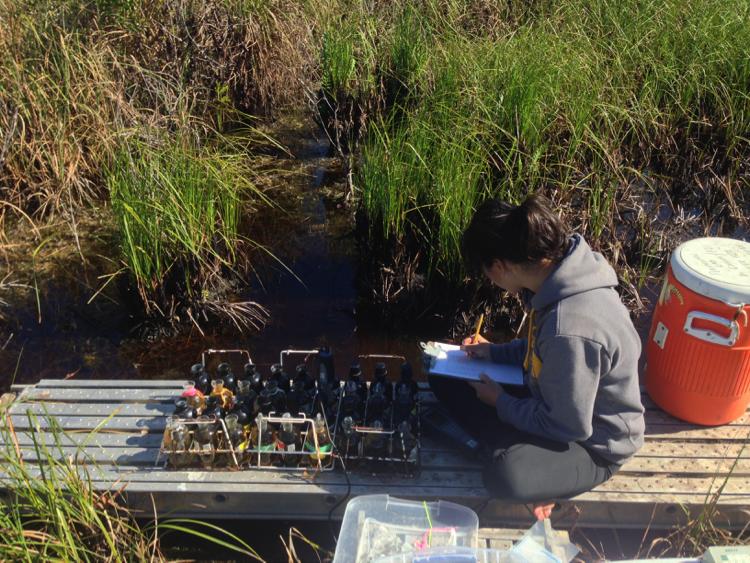 Viviana Mazzei studies algae in Everglades.